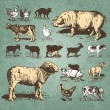 图库矢量图片: Farm animals vintage set (vector)