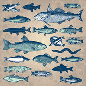 Vintage fish set (vector) — Vecteur