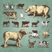 Farm animals vintage set (vector) — Stockvektor