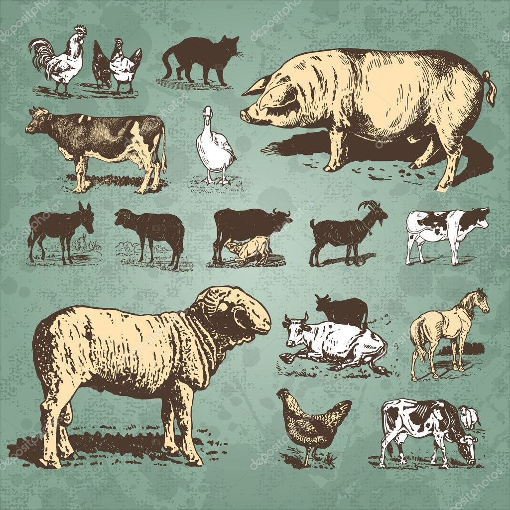 Set of farm animal antique engravings, scalable and editable vector illustration;  Vettoriali Stock  #5350441
