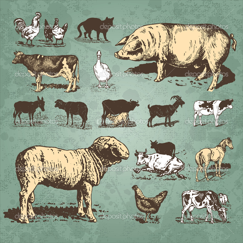 Set of farm animal antique engravings, scalable and editable vector illustration; — ベクター素材ストック #5350441