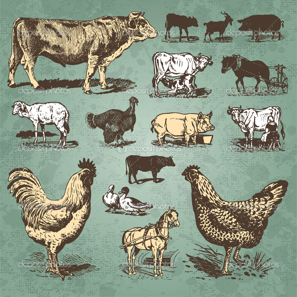 Set of farm animal antique engravings, scalable and editable vector illustration; — Stok Vektör #5350445