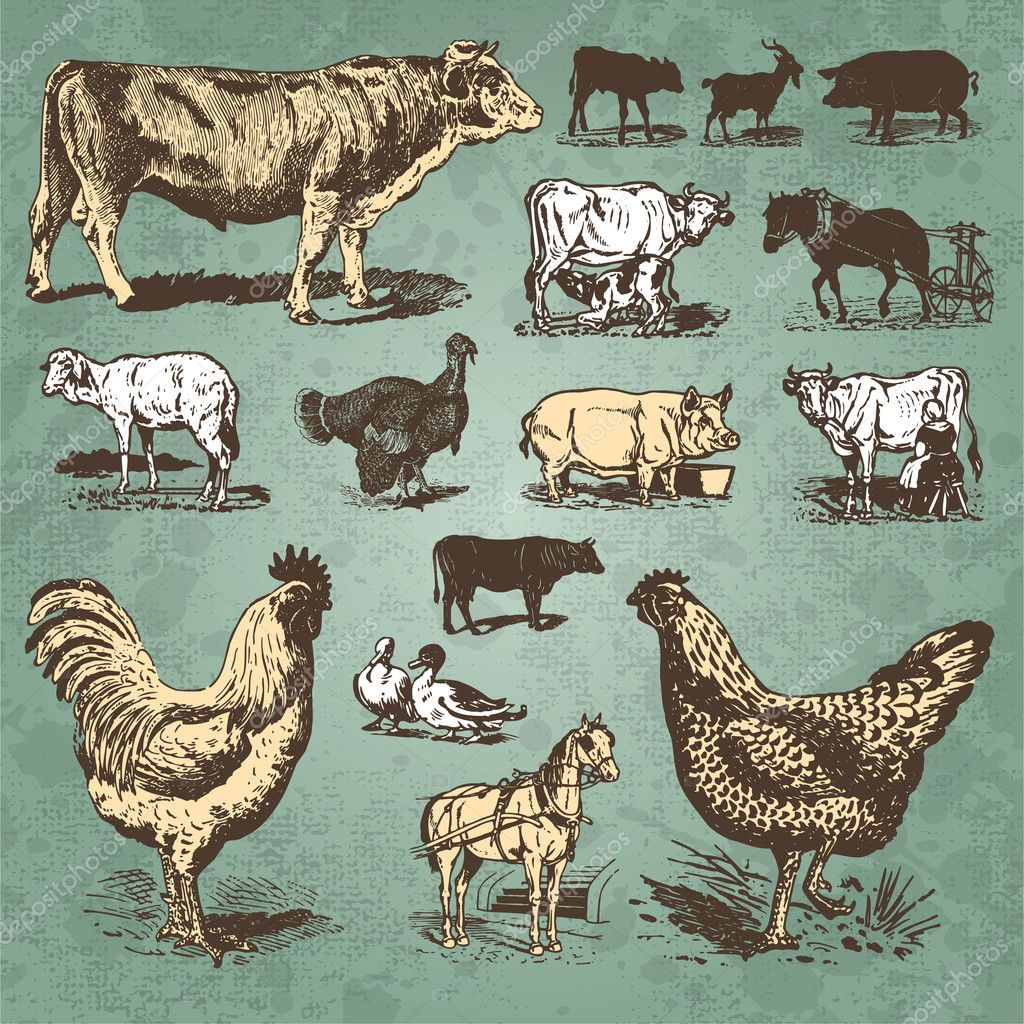 Set of farm animal antique engravings, scalable and editable vector illustration; — Stockvectorbeeld #5350445