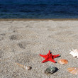 Red sea star and shells on beach - Stock Photo