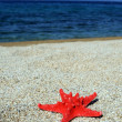 Red sea star on beach — Stock Photo