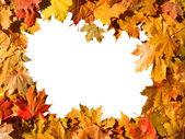 Frame of maple leaves. — Stock Photo