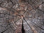 Trama tagliati tronchi da sega. — Foto Stock