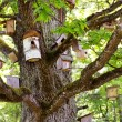 Royalty-Free Stock Photo: Group of bird houses on old big tree