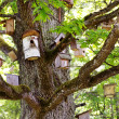 Group of bird houses on old big tree - Stock Photo