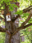Group of bird houses on old big tree — Stock Photo