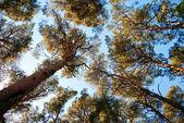 Torekov forest — Stock Photo