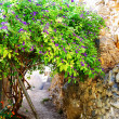 Platanias alleyway — Stock Photo