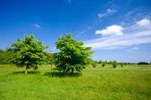 Trees on green field — Stock Photo