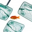 Goldfish and nets — Stock Photo