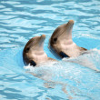 Dolephin race - Stock Photo