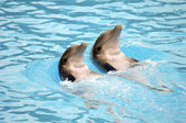 Dolephin race — Stock Photo