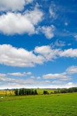 Idylic farmlandscape — Stock Photo