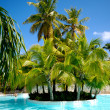 Palms and swimming pool — Stock Photo