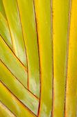 ヤシの葉 — ストック写真