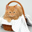 Cat resting in a basket - Stock Photo