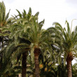 Stock Photo: Palm forest