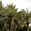 Palm forest — Stock Photo