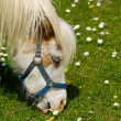 Horse eating green grass — Stock Photo