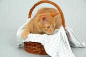 Kitten is playing — Stock Photo