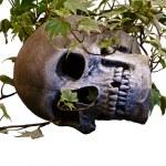 Постер, плакат: Skull in Ivy