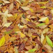 Autumnal background -  