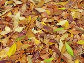 Herbstliche hintergrund — Stockfoto