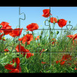 Jigsaw puzzle Poppies — Stock Photo