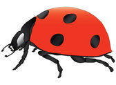 Ladybird vector illustration — Stock Vector
