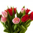 Stock Photo: Red and pink tulips