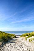 Beach and sand dunes — Stock Photo