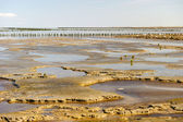 Wadden sea in Holland — Stock Photo