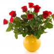 Bouquet red roses — Stock Photo