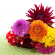 Stock Photo: Dahlia flowers