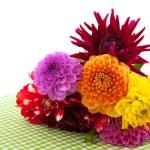 Yıldız Çiçeği çiçek — Stok fotoğraf