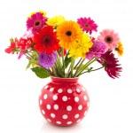 Dahlia and Gerber flowers — Stock Photo #3964352