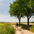 Stock Photo: Dutch landscape with walking man
