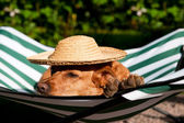Dog on vacation — Stock Photo