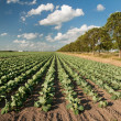 Agriculture landscape — Stock Photo #4026960