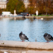 Doves in Paris — Stock Photo
