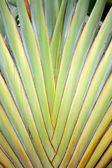 Tropical green plant texture — Stock Photo
