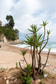 Spanish coast — Stock Photo