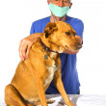 Veterinair with dog — Stock Photo