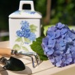 Garden still life - Stock Photo