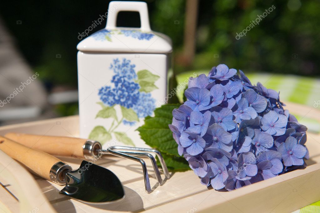 Garden still life with blue Hydrangea and gardening work tools — Stock Photo #4390455
