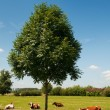 Stock Photo: Dutch landscape with cows